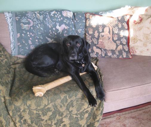 Tilly's very big bone