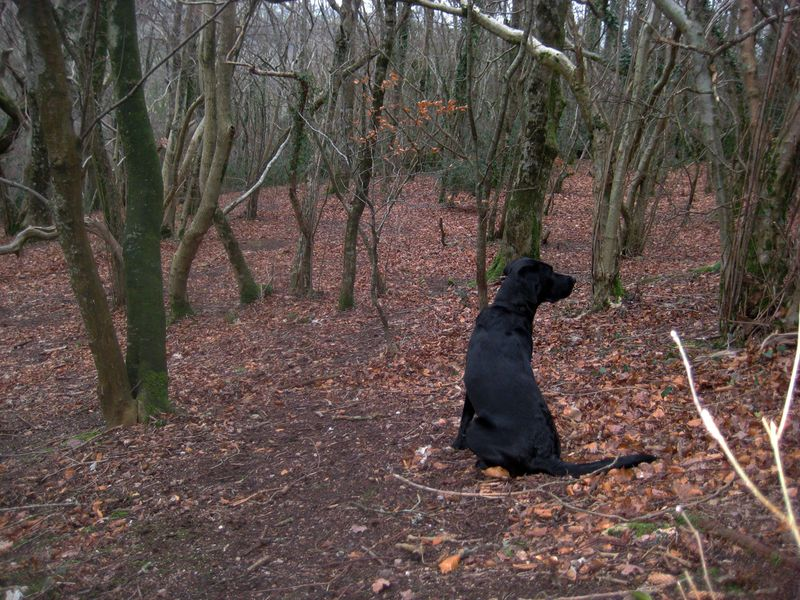 Tilly in the winter woods