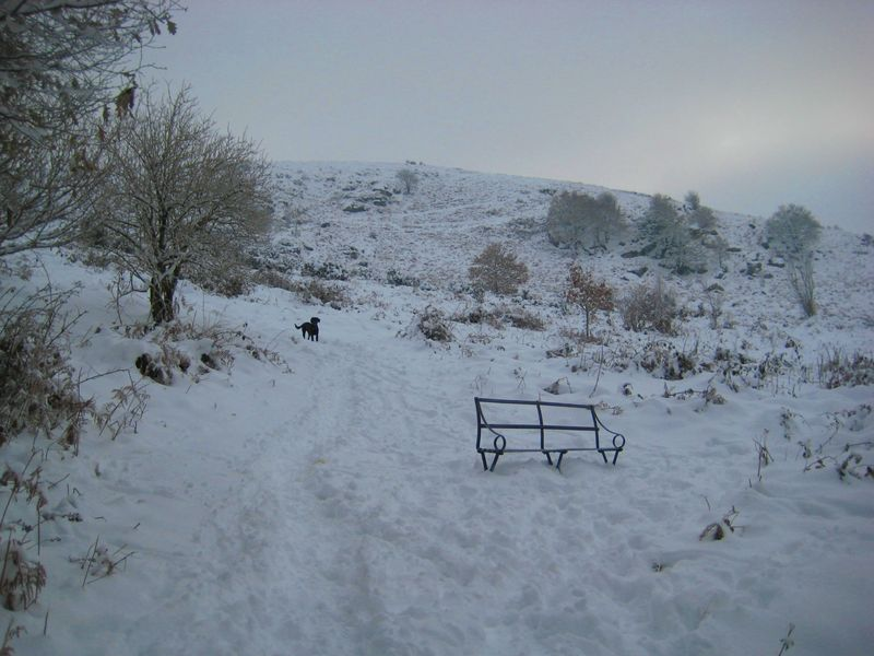 Bench in snow copy