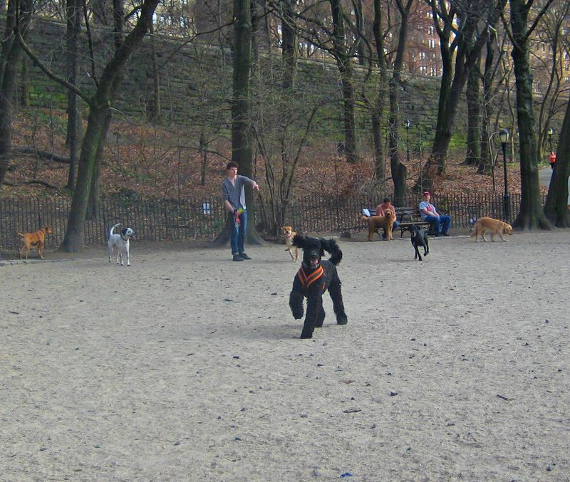 Riverside Dog Park 4