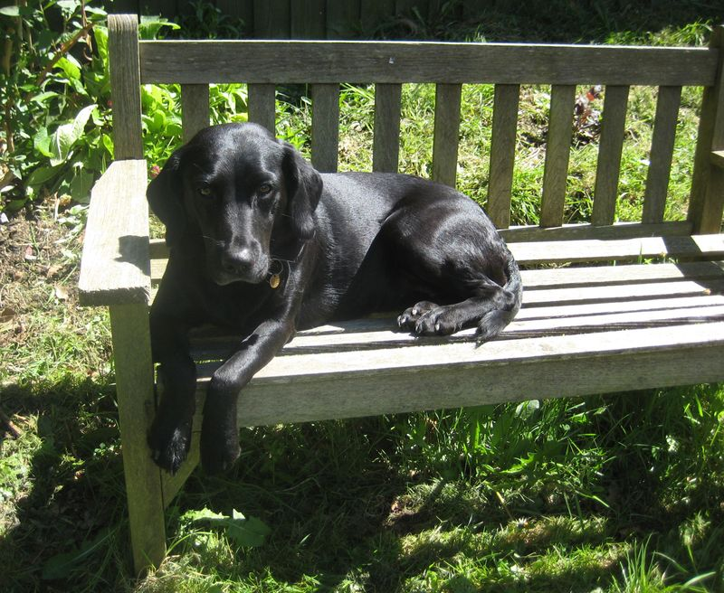 Tilly on the bench