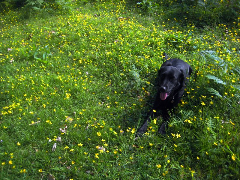 Tilly and the buttercups
