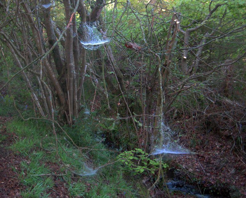 Cobwebs…or faeries in flight?