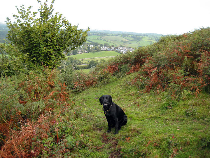 Tilly on Nattadon Hill