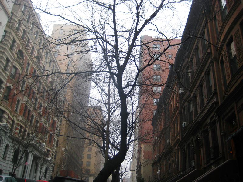 The trees of New York