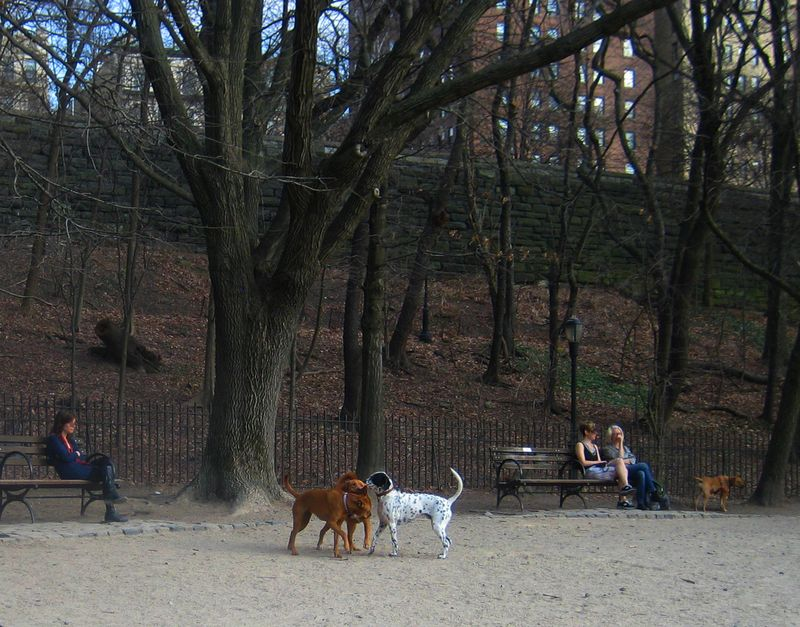 Riverside Dog Park 3
