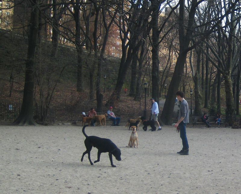 Riverside Dog Park 1