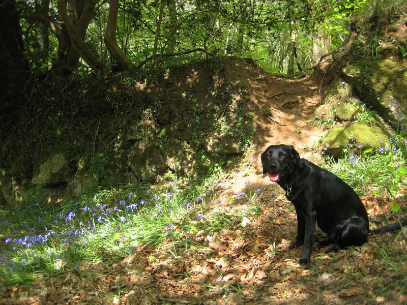 Tilly and the bluebells