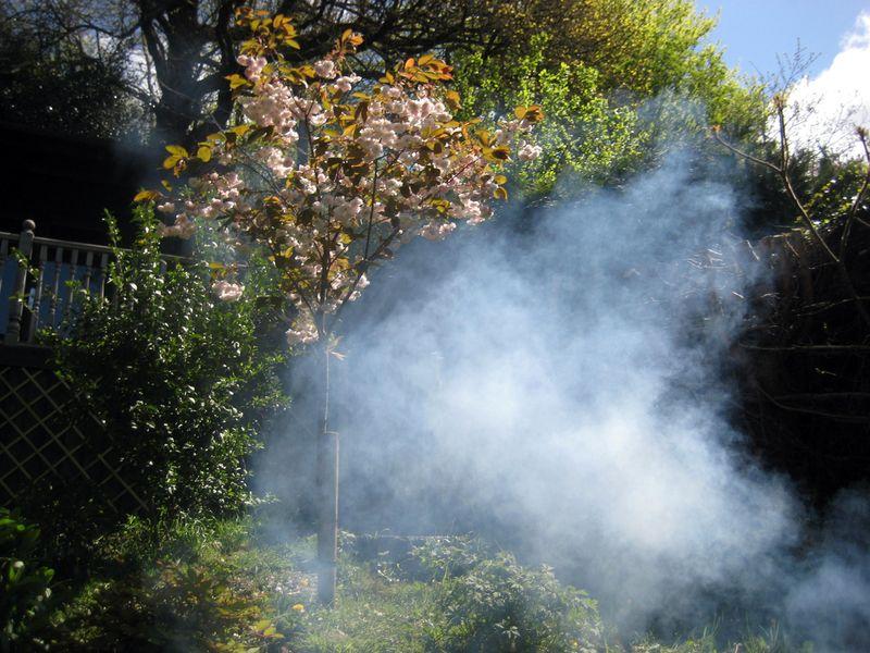 Cherry tree and campfire smoke