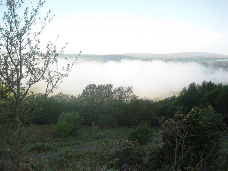 Mist2
