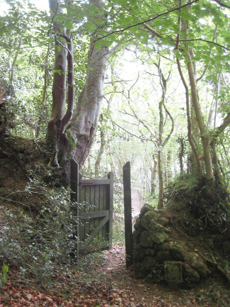 Woodland gateway