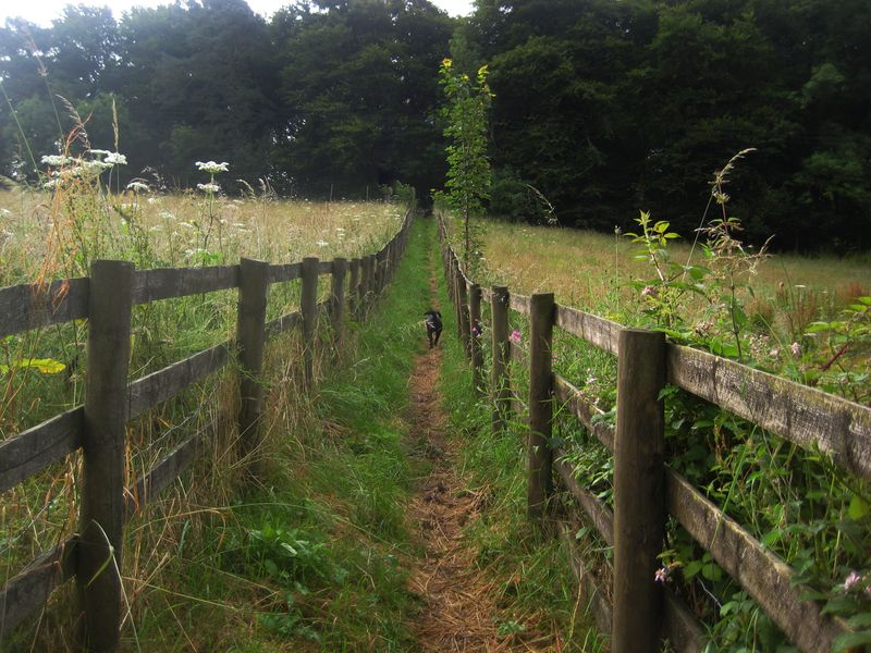 Chagford, Devon