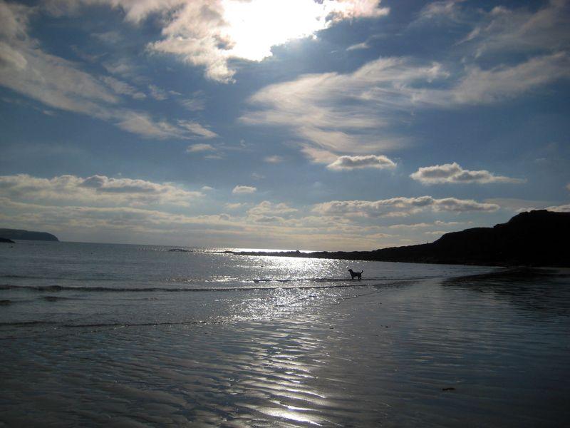 Tilly on the Devon coast
