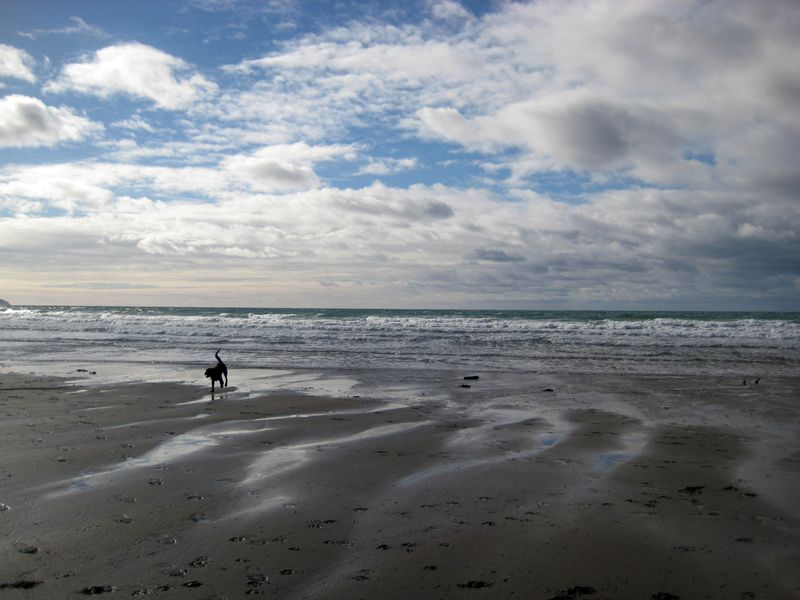 Tilly on the north Devon coast