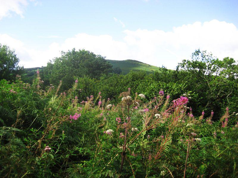 Meldon Hill (view from Nattadon)