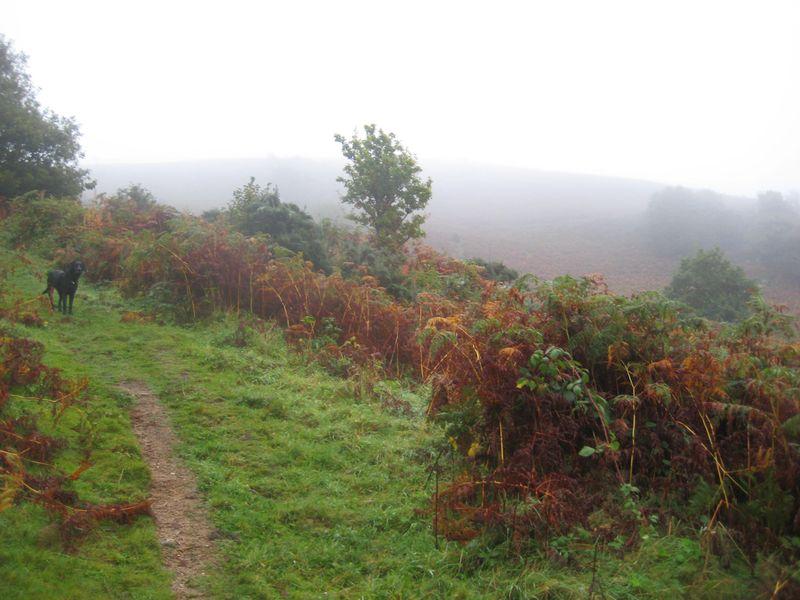 Mist on Nattadon 4