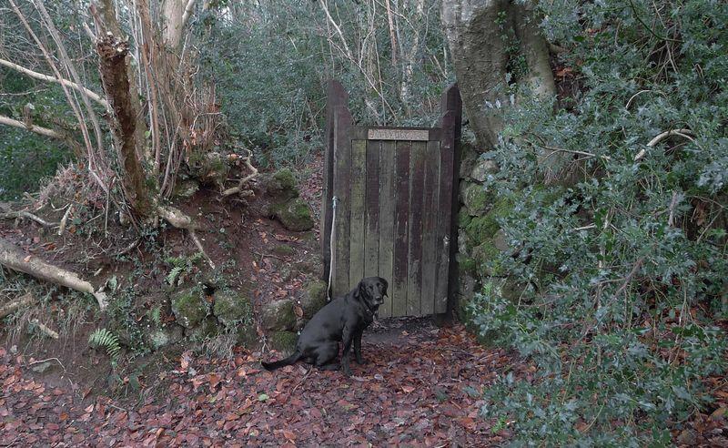 Woodland gate, 1