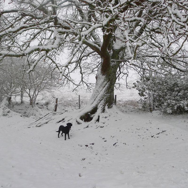Old oak, 2
