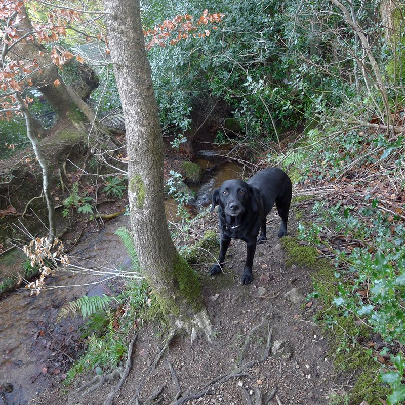 Tilly beside the stream