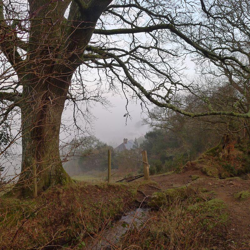 Oak in mist, 1