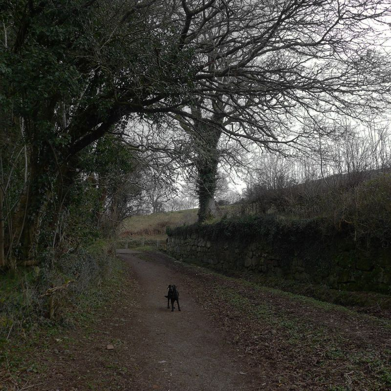 Tilly in the lane