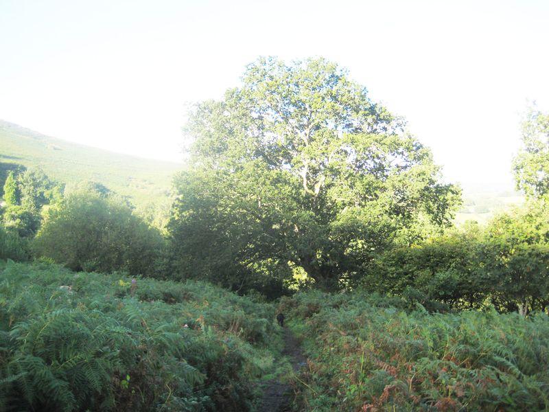 Tree 5 6x8