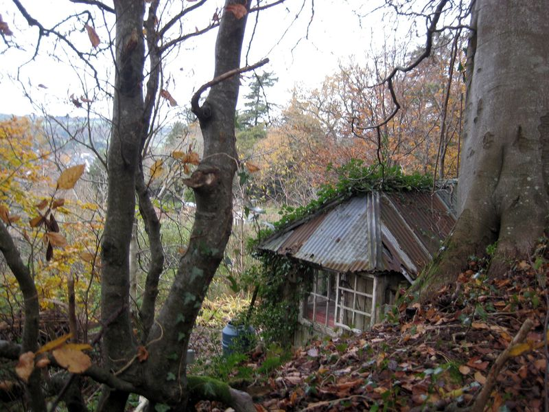 Eric's shed in autumn