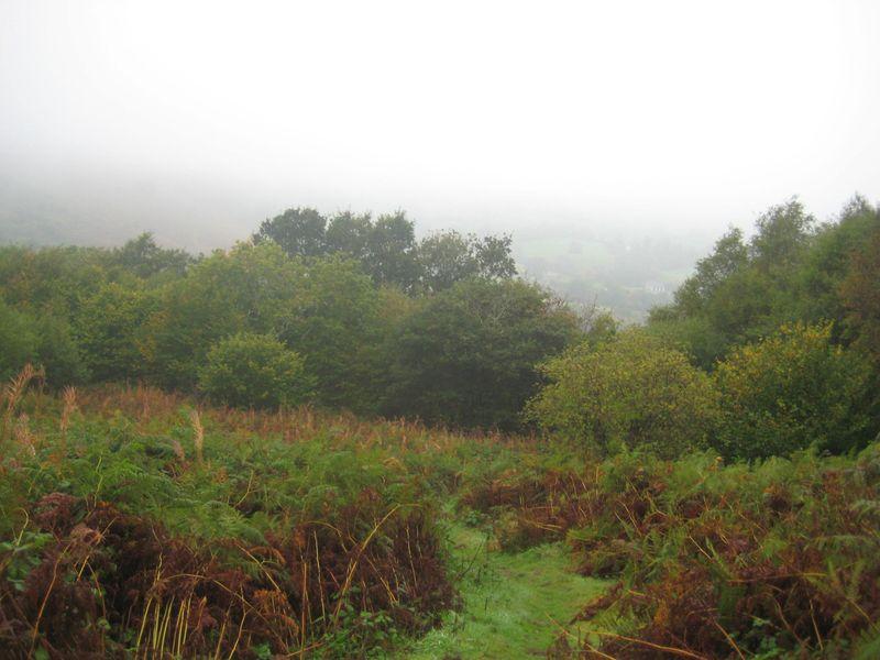 Mist on Nattadon 5