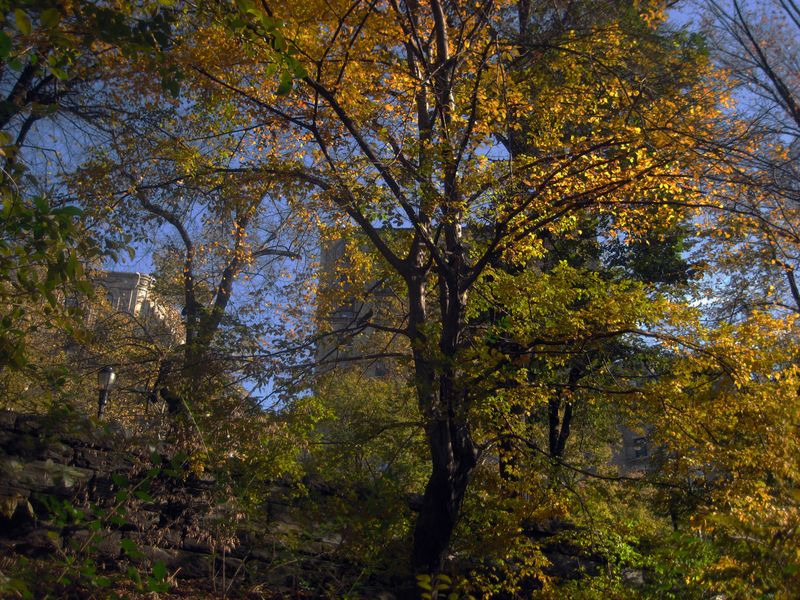 Autumn leaves on Riverside Drive, Manhattan.