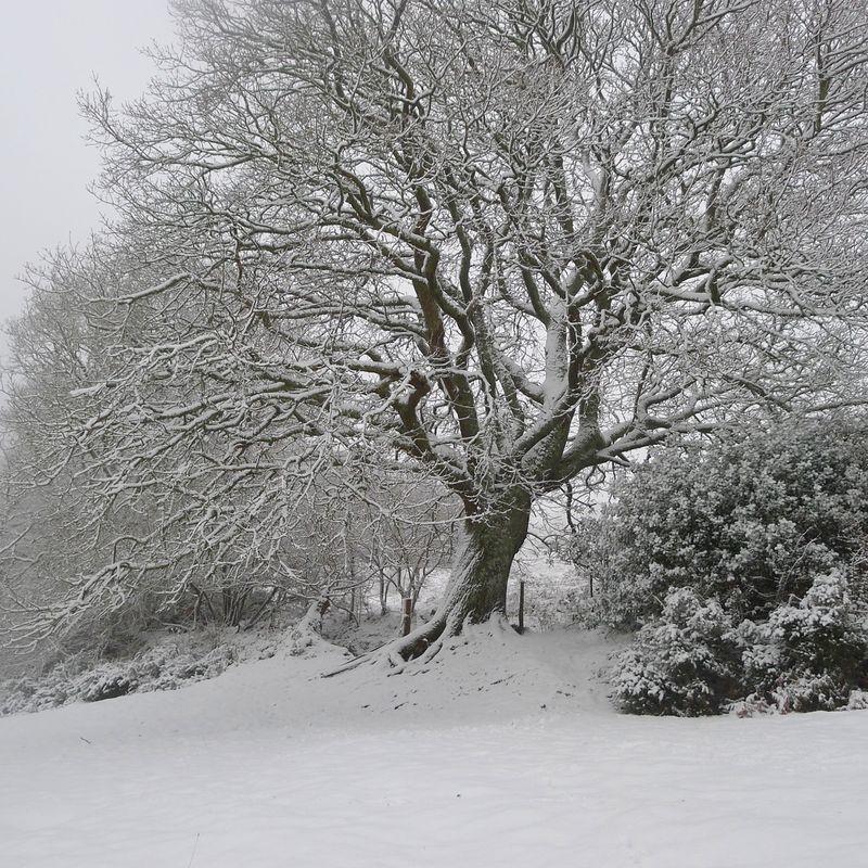 Old oak, 1