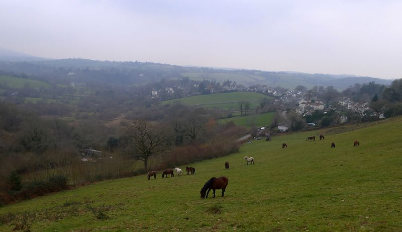 Dartmoor ponies grazing in a neighbors field...