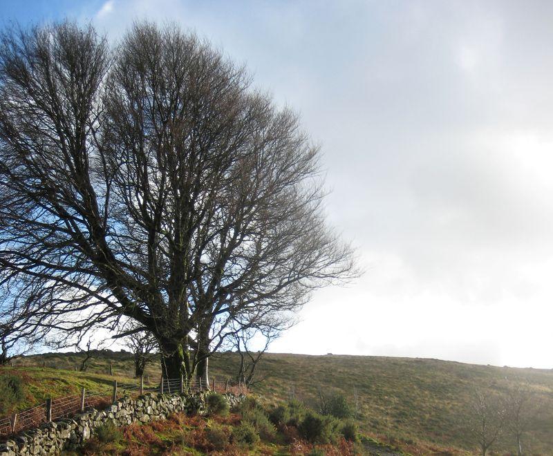 Pathway onto the moor in deep winter