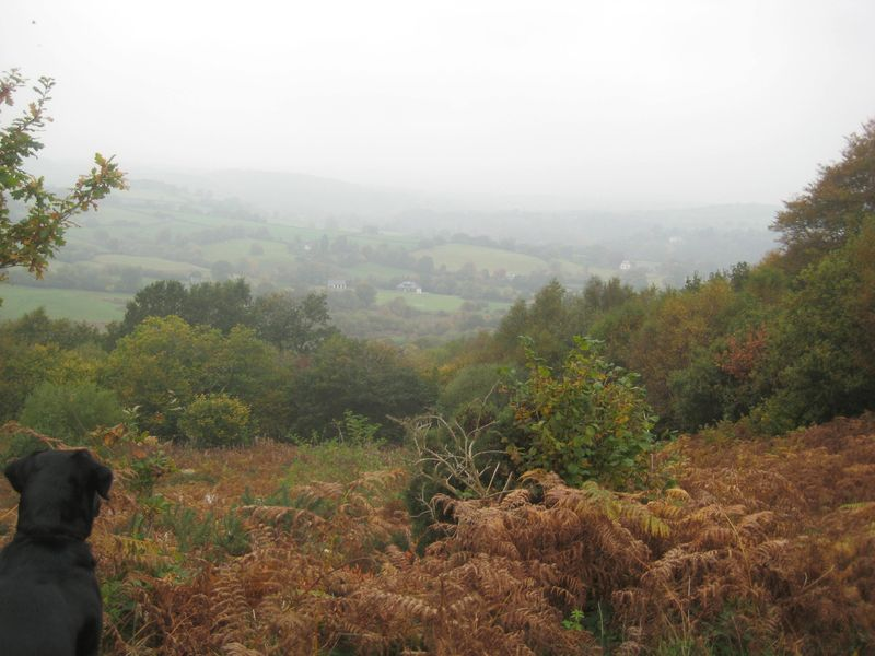 Nattadon Hill in Autumn