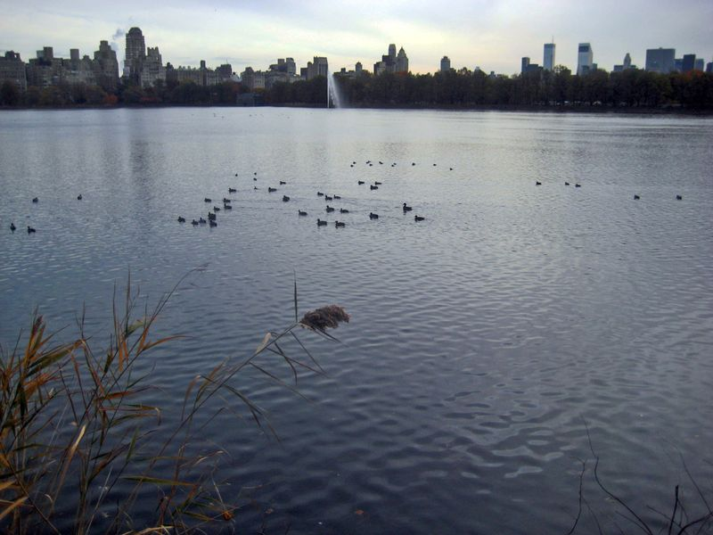 Light on the Central Park Reservoir...