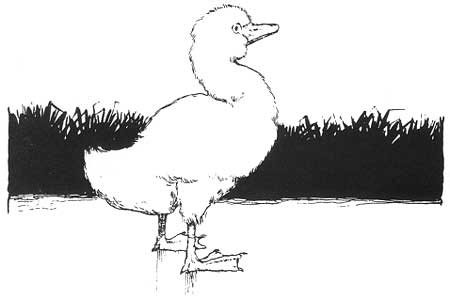 The Ugly Duckling by Wm Heath Robinson
