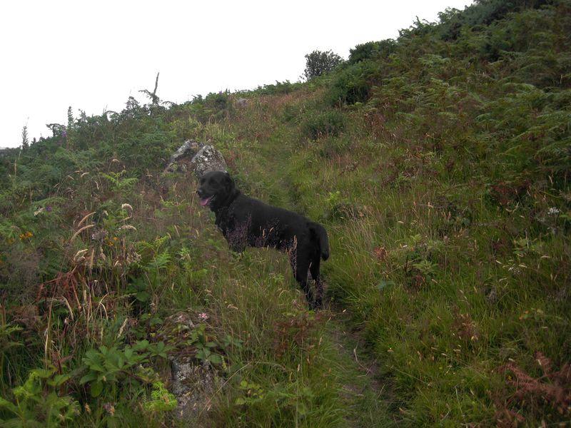 Tilly on Nattadon Hill