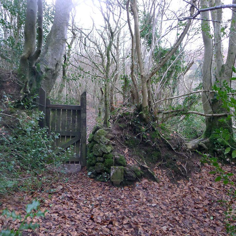Woodland gate, 3