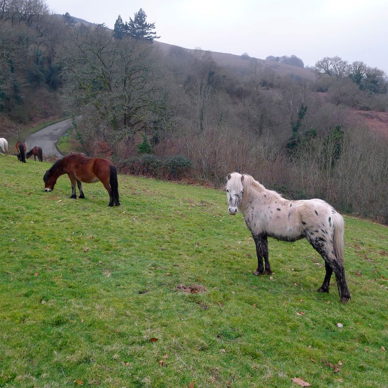 ...and the ponies ignore her, grazing placidly.