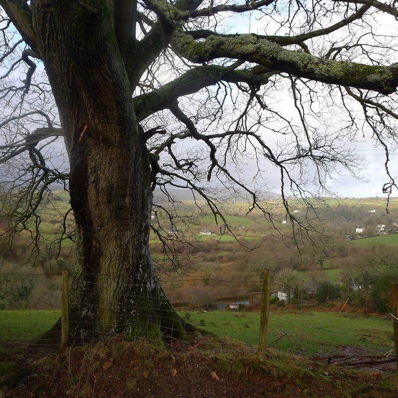 Oak and earth.