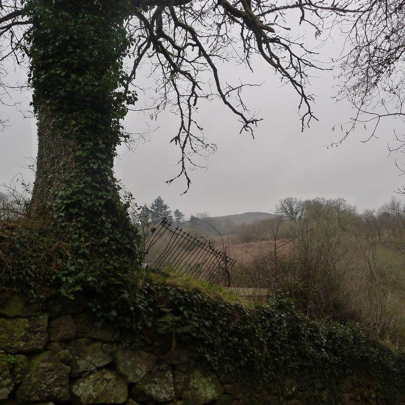 Ivy clad tree, stone wall, iron fence
