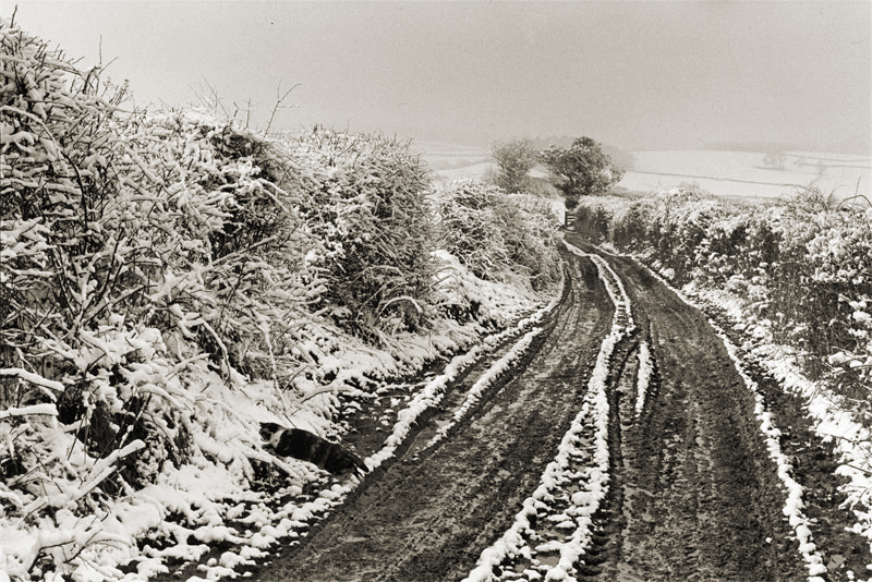 Snowy Tracks by James Ravilious