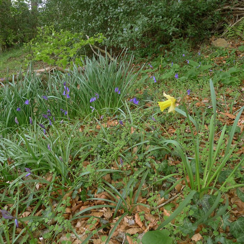 Wlldflowers