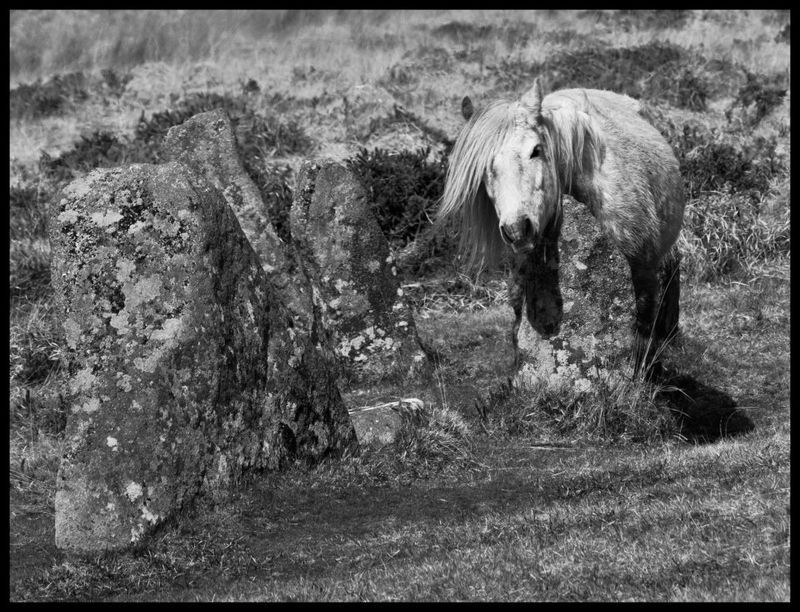 White Pony at Scorhill Circle by Stu Jenks