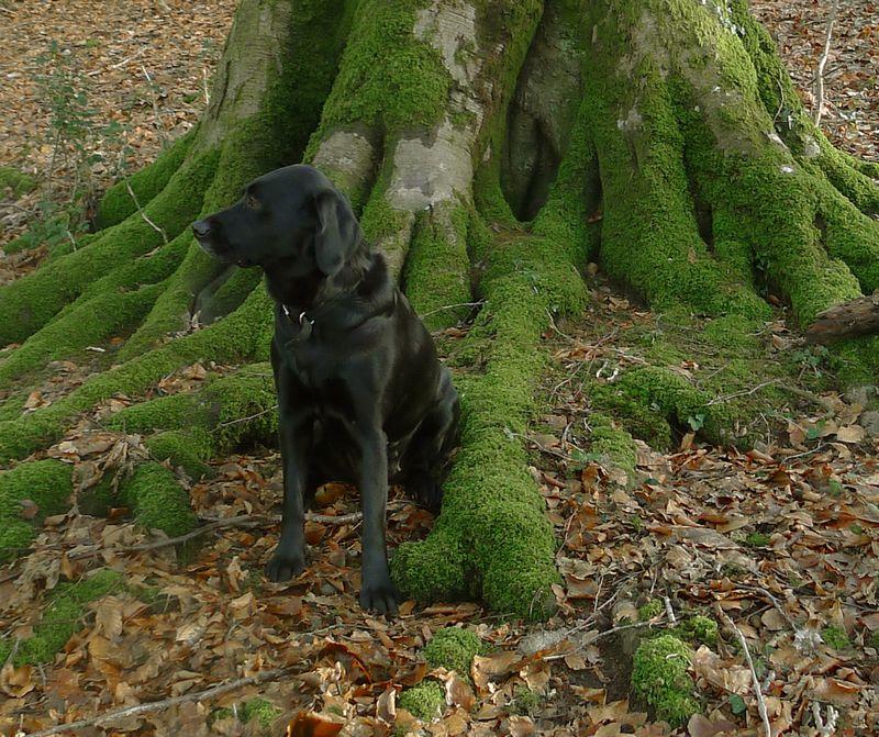 Root Dog