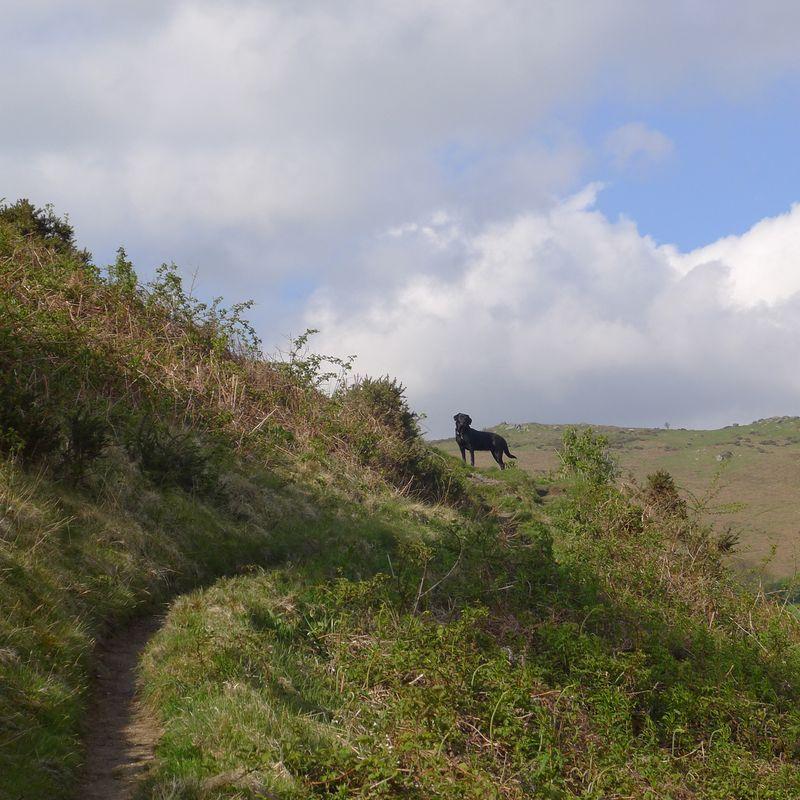 Nattadon Hill 3