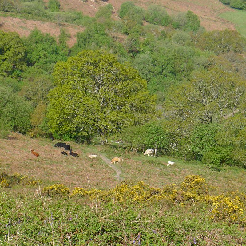 Nattadon Hill 8