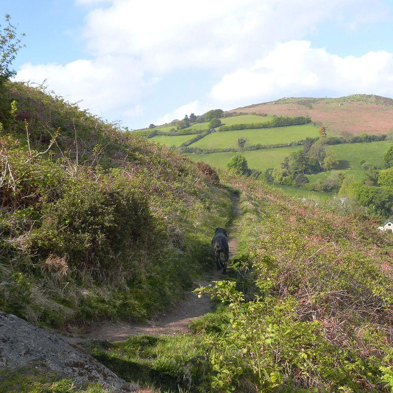 Nattadon Hill 1