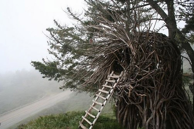 Bird's Nest Tree House