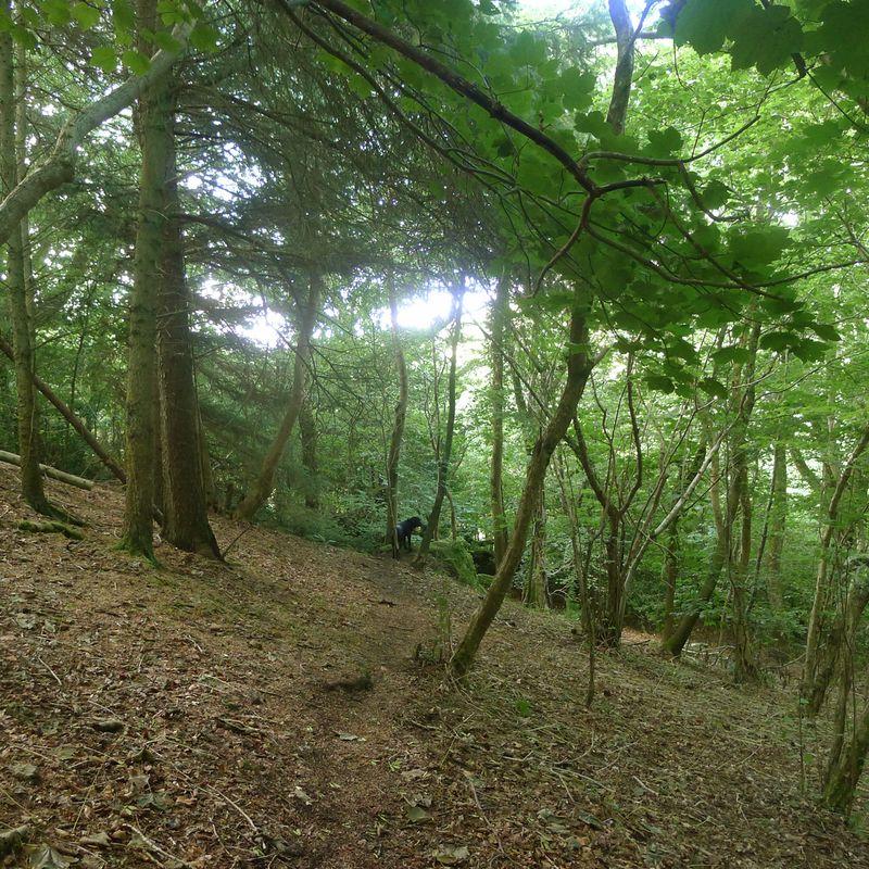 Woodland meditation 2