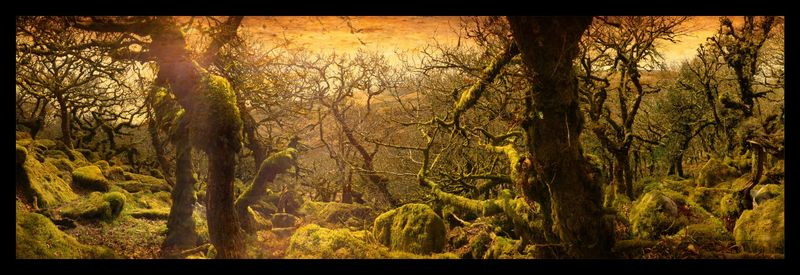 Ancient Oaks in Wistman's Wood by Stu Jenks